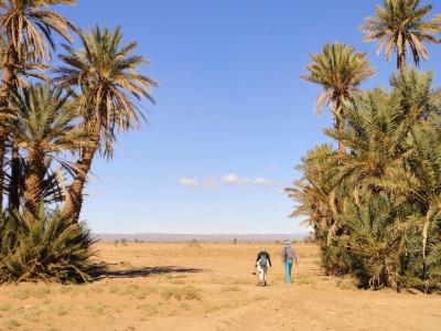 Randonnée des Kasbahs du Dadès aux dunes et oasis du Draa