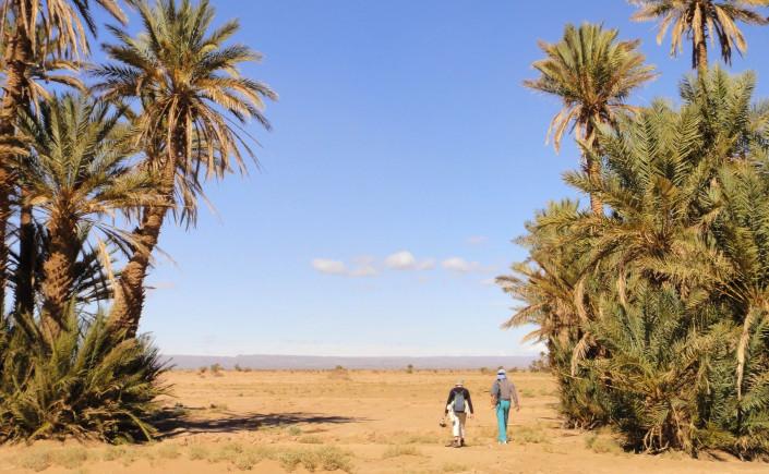 Kasbahs du Dadès au dunes et oasis du Draa-1
