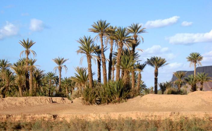 randonnée chamelière oasis omjrane dunes Erg Chébi