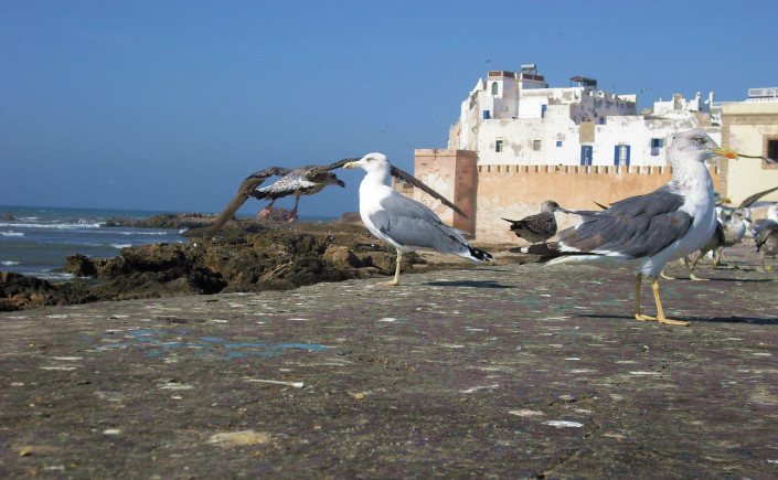 Randonnée essaouira Maroc