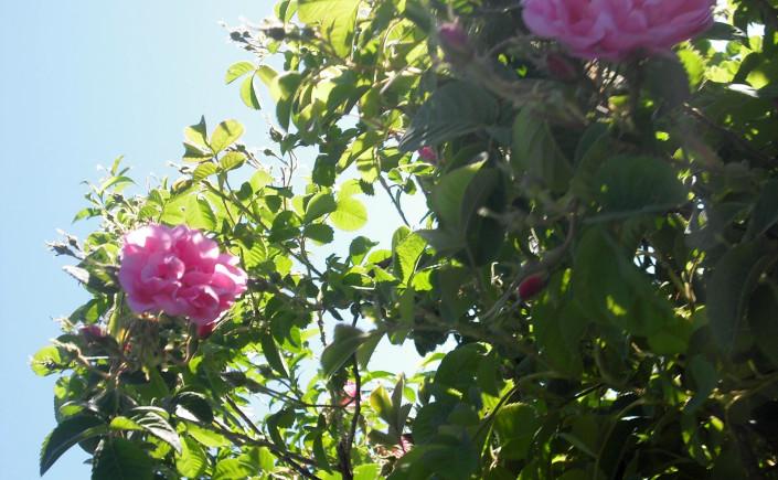 séjour spécial fête des roses-1